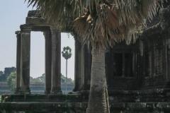 Angkor Wat - Palme im Blick