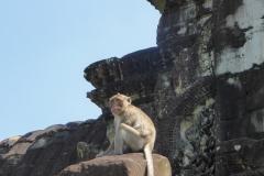Angkor Wat - Überwachungsaffe