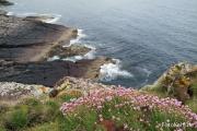 Blüten am Meer.