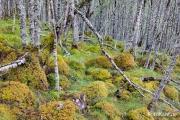 Natur Pur am River Affric.