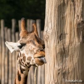 Zoo_-_5