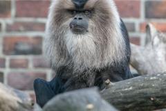 Zoo_-_11