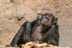 Zoo_-_3