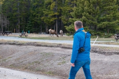 Kanada - Banff - Die sind echt!