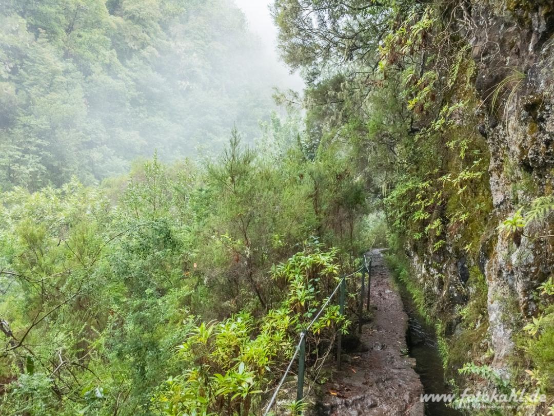 Wandern durch den Nebelwald.