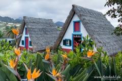 Casas Tipicas in Santana mit den überall blühenden Strelitzien.