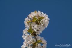 Frühlingswanderung-12